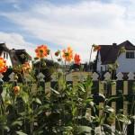 Blumenmeer am Haus