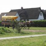 Kutschfahrten Hiddensee Neuendorf